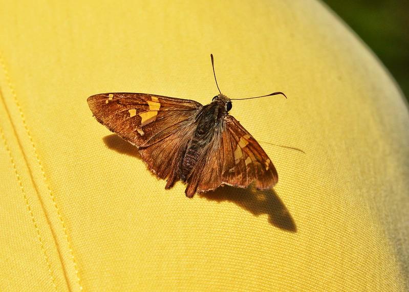 NEA_2556-7x5-Butterfly.jpg