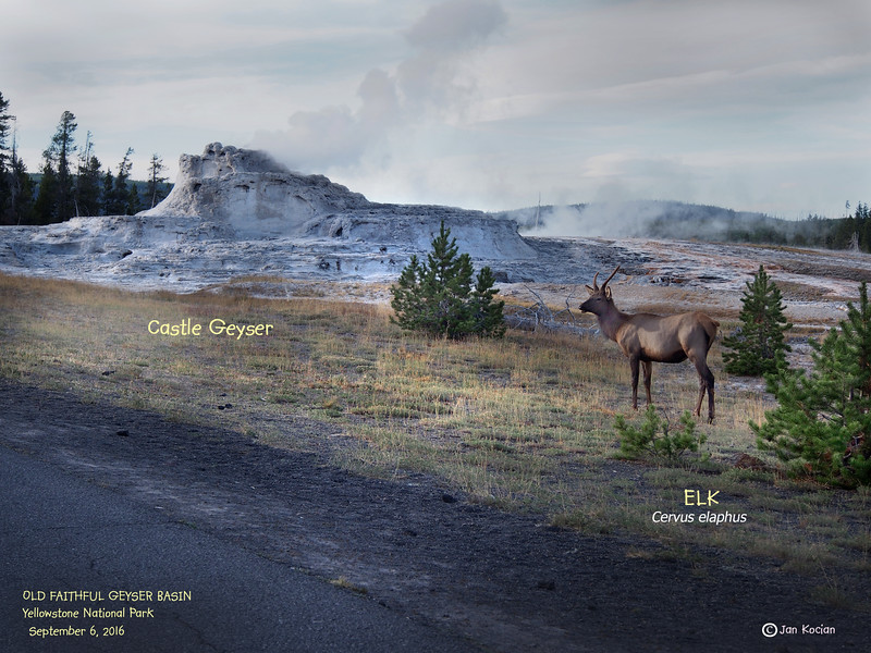 9.6.16 Elk Castle Geyser .jpg