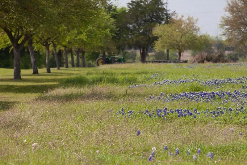 2015_4_3 Texas Wildflowers-7864.jpg