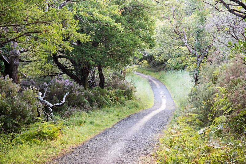 Muckross Park lanes