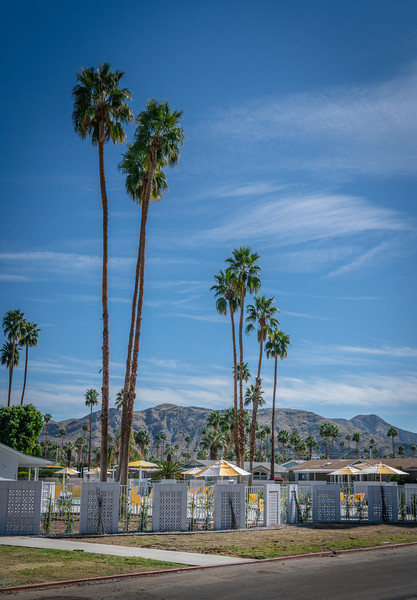 palm-springs-tiny-homes-clubhouse-palm-trees.jpg