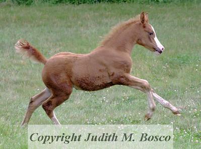 Tancerka's Foal