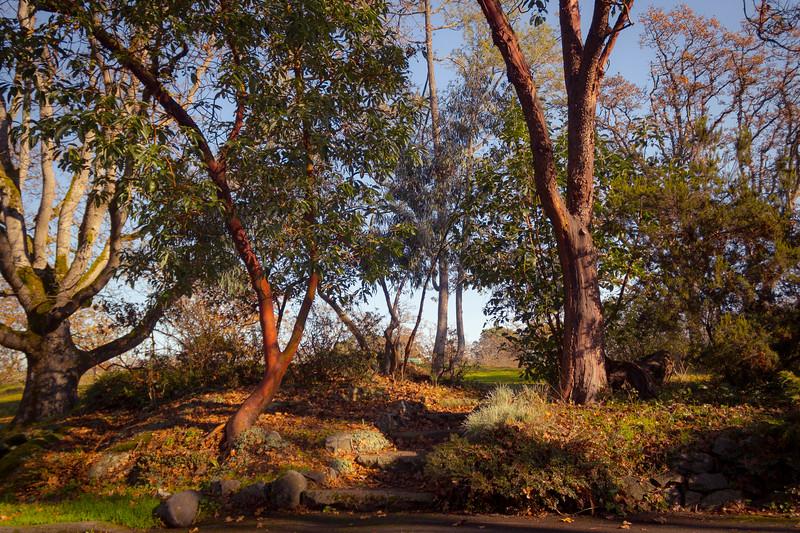 beacon hill park-5.jpg