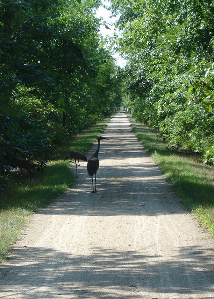 Wisconsin Bike Trip - August, 2008