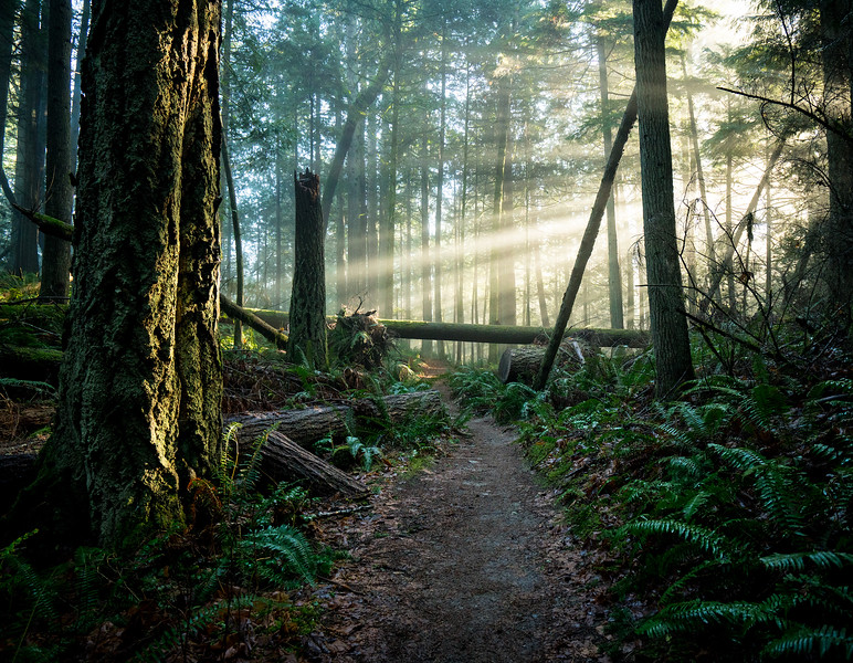 Forest-bathing-stimpson-nature-reserve