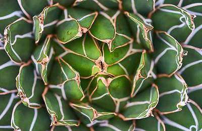 Spiky Lines by Dmitry Dreyer
