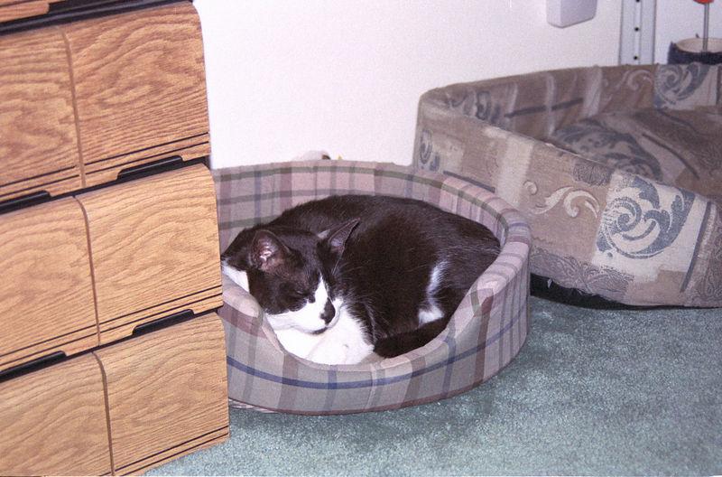 2003 12 - Cats 59.jpg