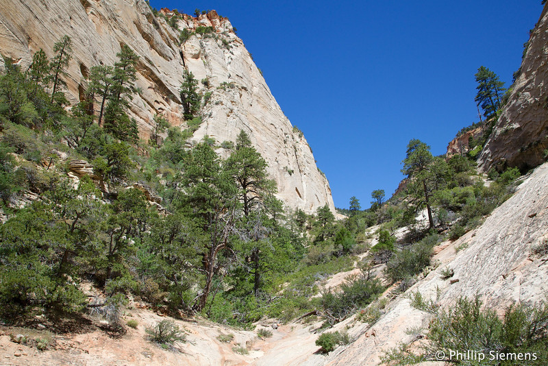 Approaching the brushy upper end of Many Pools Canyon