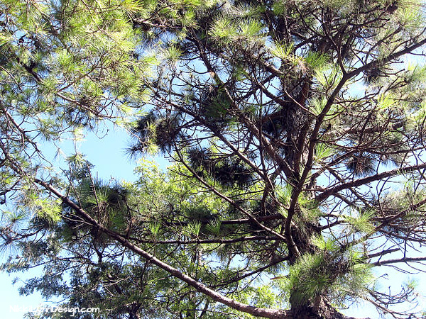 Evergreen trees keep their foliage year round. The foliage is generally in the form of needles. They DO lose leaves but much differently than deciduous trees.