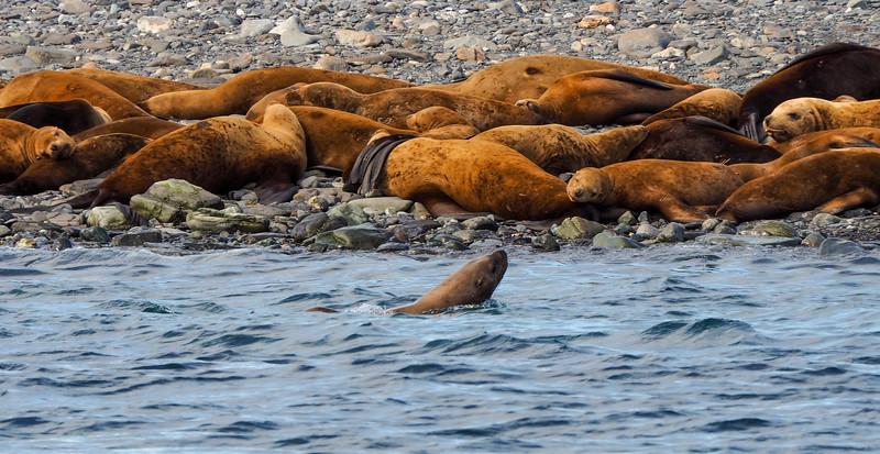 harbour seals juneau nap time-1.jpg