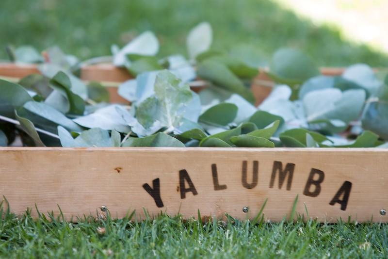 Yalumba-3557.jpg