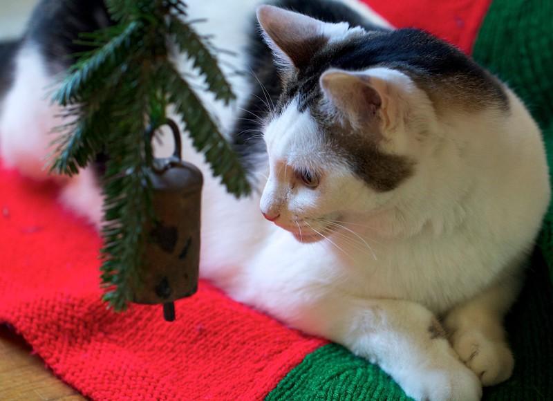 Linus under the Christmas tree