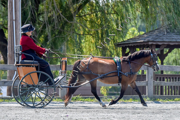 MD Pony Breeders 071418