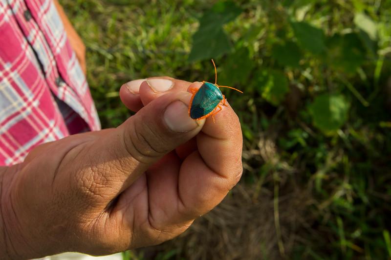 Pratt_Belize San Lorenzo Farm_01.jpg