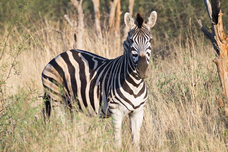 Madikwe-121.jpg