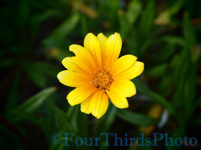 E-620 sample shots - Flower Pinhole