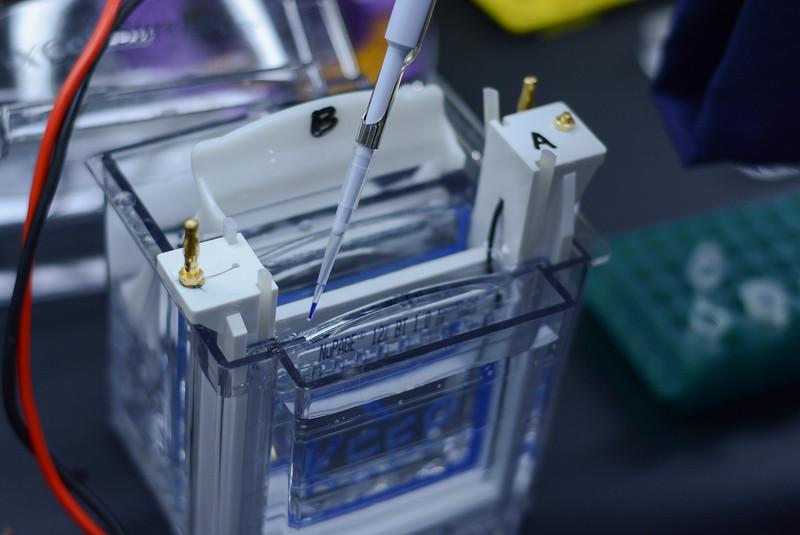CNRM 2018 labs398.jpg