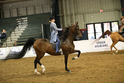 56 890 Walk/Trot Country/English Pleasure  10 & Under