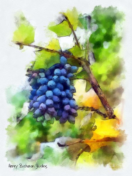 Spring Grapes  (NC) Studio Art