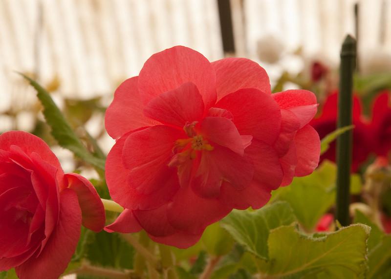 2009 09 06_White Flower Farm_0140_edited-1.jpg