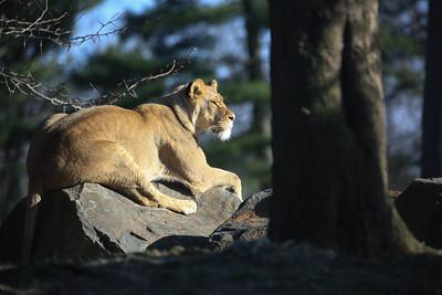 Wildlife Zoo living