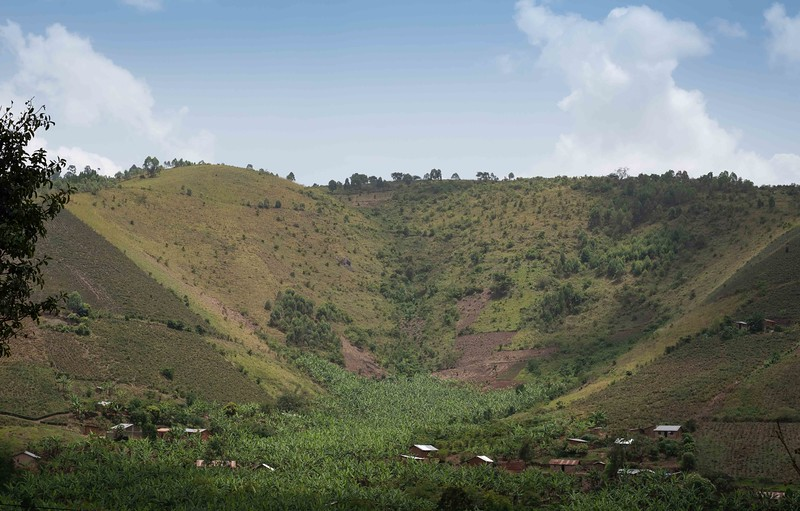 Banana and Tea crops, at the expense of forest. Global reality.