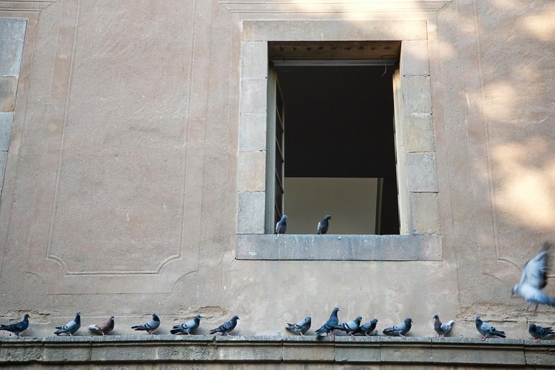 Doves on the Hospital de la Santa Creu (Saint Cross Hospital, 15th century) courtyard. Town of Barcelona, autonomous commnunity of Catalonia, northeastern Spain