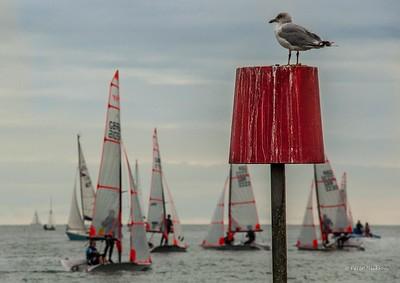 Just Sailing - Social Sailing, Windsurfing, Non-racing