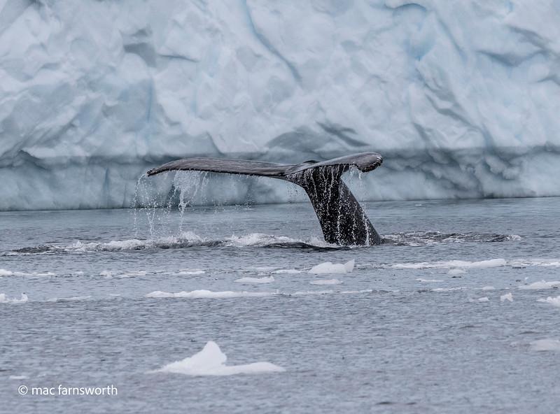 antartica-62.jpg