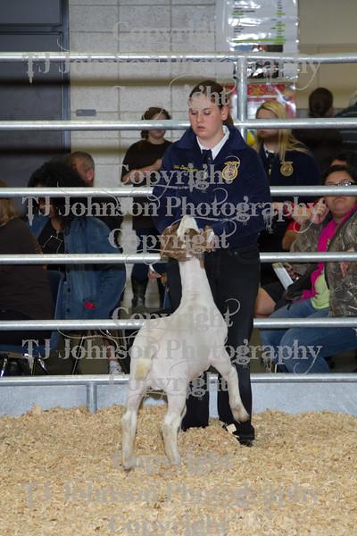 2013 Klein ISD Goat Show Class 2