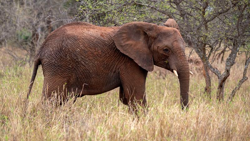 Tanzania-Tarangire-National-Park-Safari-Elephant-12.jpg