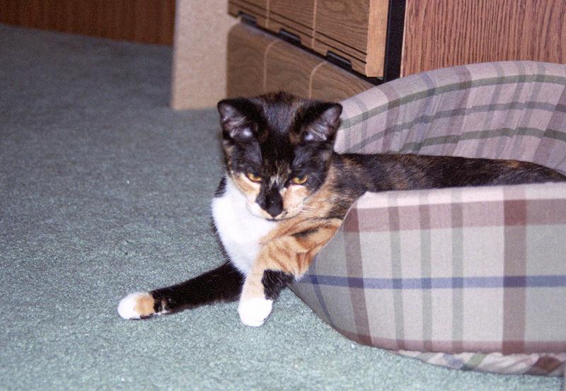 2003 12 - Cats 16.jpg