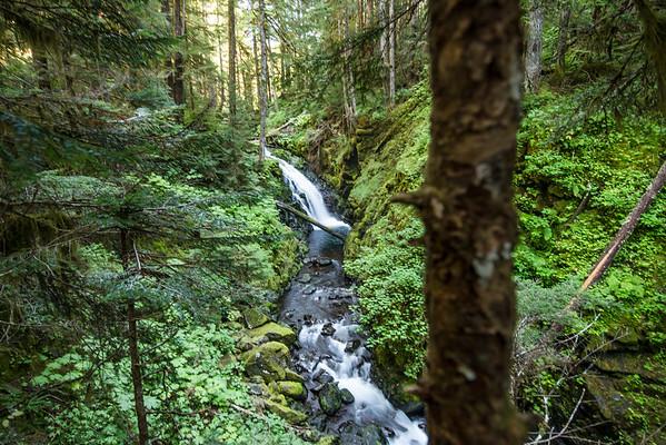 Mythical Rainforest