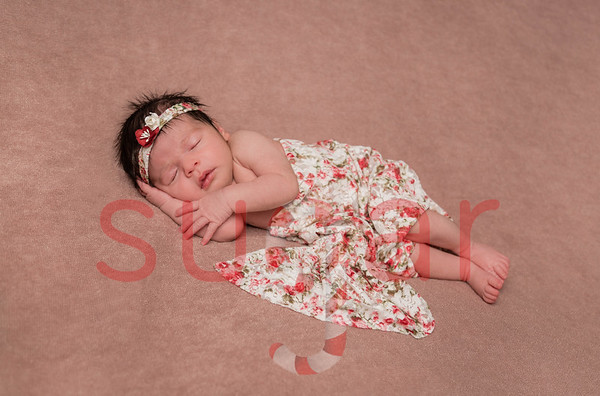 Nolah's Newborn Photoshoot