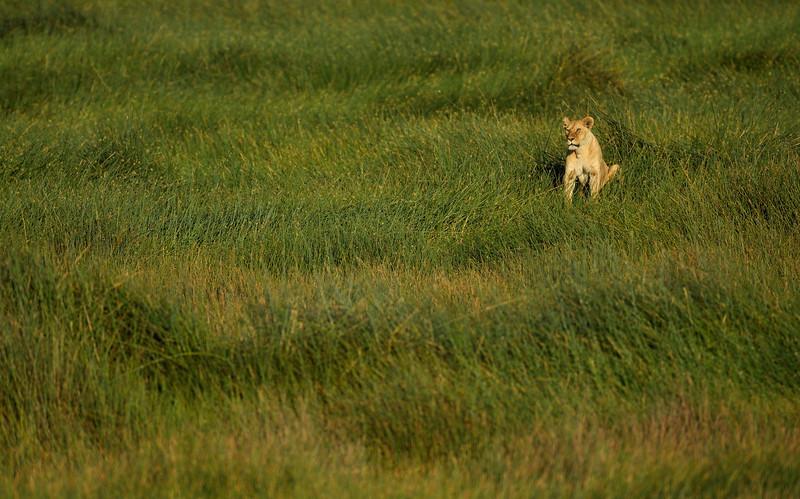 Lioness-keeps-watch-Serengeti.jpg