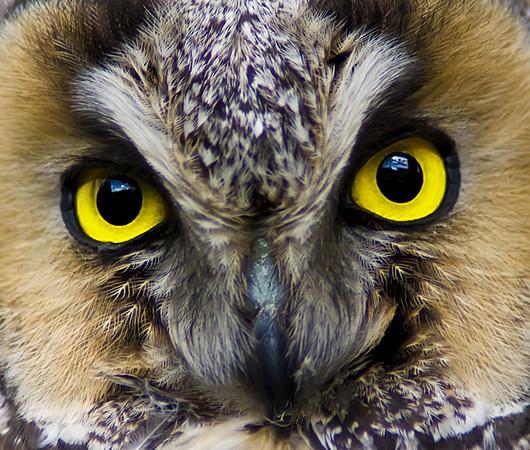 Owls | Nocturnal birds