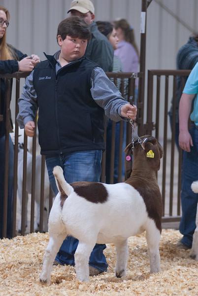kay_county_showdown_goats_20191207-124.jpg
