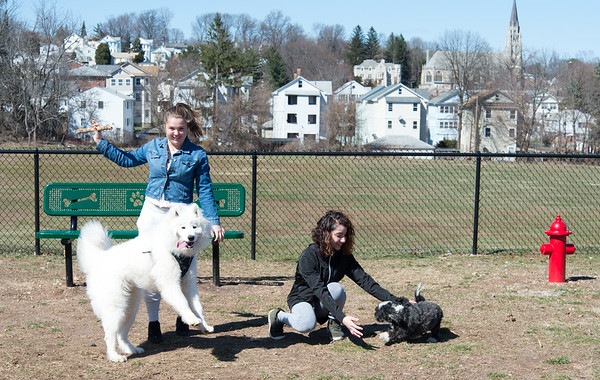 04/01/19 Wesley Bunnell | Staff Cassandra Anderson, L, plays with her dog Skyla, a Samoyed, while friend Jazmarie Santiago plays with her dog Bell, a Shitzu and poodle mix, at the Carmody St dog park on Monday afternoon.