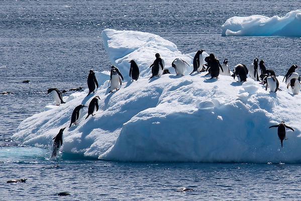 Penguins & Other Birds