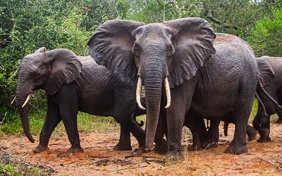 Tembe Elephant Park - KZN
