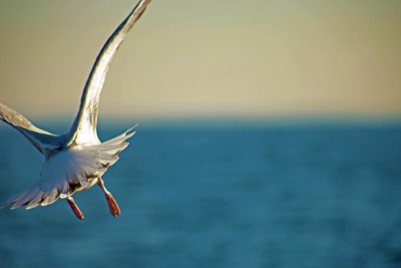 seagull from behind.jpg
