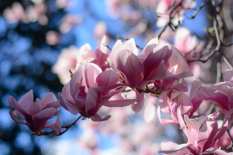 first-flowers-28.jpg