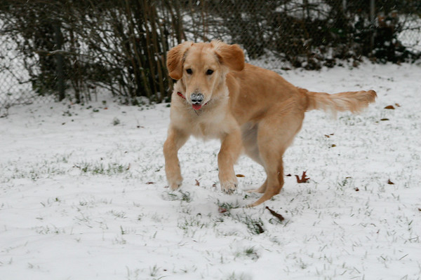 Lucy's First Snow