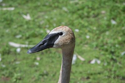 Kellogg Bird Sanctuary
