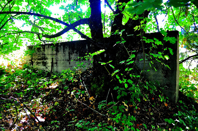 wall in the woods 9-13-2011.jpg