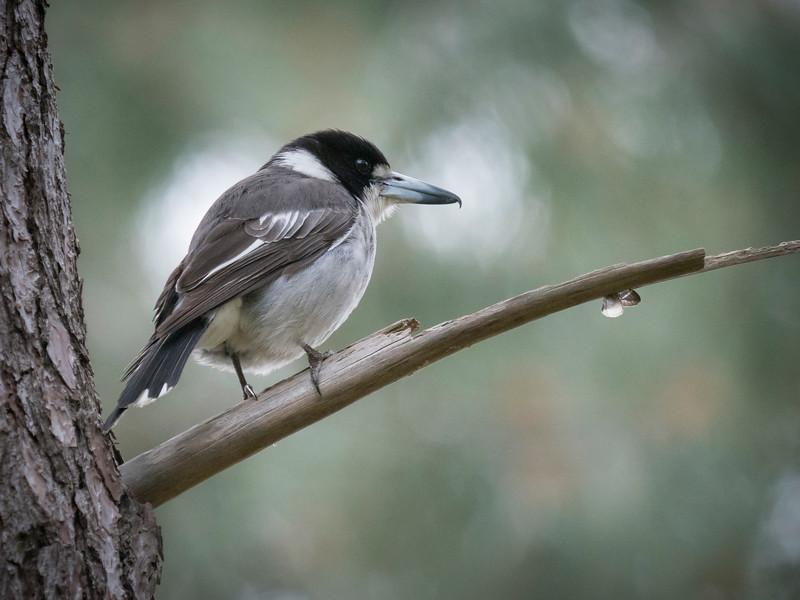 20180925_7085 R 2423   R birds 2428  .JPG