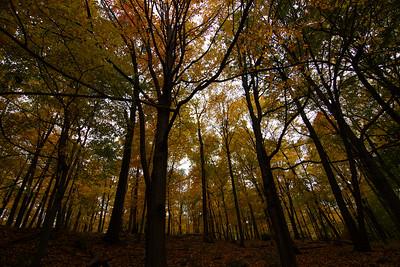 Pallasades - October 2006