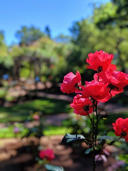 Annapolis Royal Gardens 4.jpg