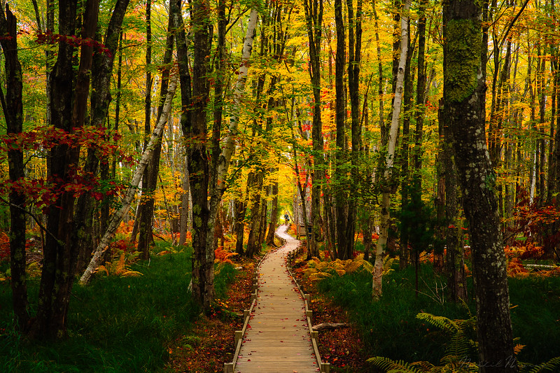 A walk in the woods - Acadia National Park
