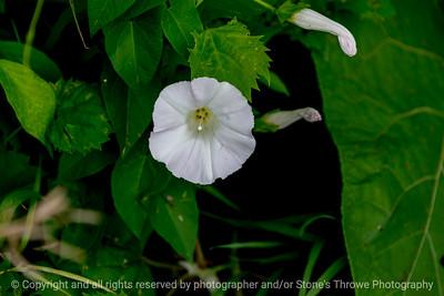015-flower-wdsm-20jul18-12x08-207-500-6054